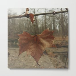 Winter Leaf Metal Print