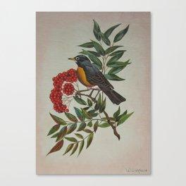 Still Life Bird Canvas Print