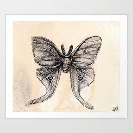 Moth 2 Art Print