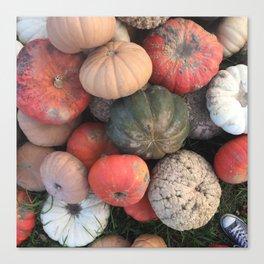 gourds. Canvas Print