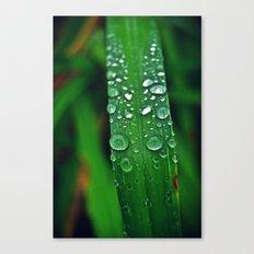 Rainy Drops (Color) Canvas Print