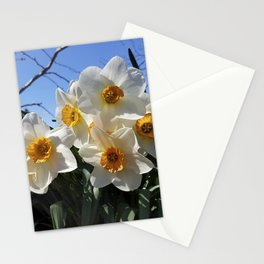 Sunny Faces of Spring - Gold and White Narcissus Flowers Stationery Cards