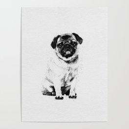 Pug dog Sketch Digital Art Poster