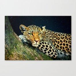 Leopards Gaze 3 Canvas Print
