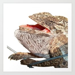 A Chameleon With Open Mouth Isolated Art Print