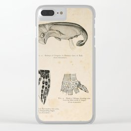 W Sidney Berridge - A Book of Whales (1900) - Figures 1-3: Porpoise Embryo; Blue Whale & Beluga Fin Clear iPhone Case