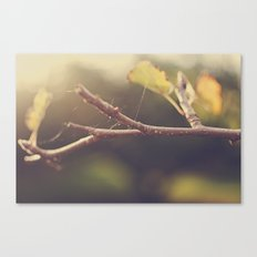 Apple Tree in the Fall Canvas Print