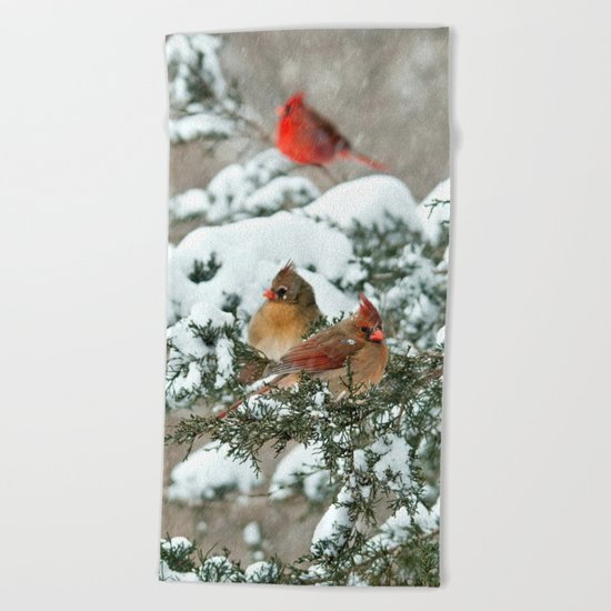 After the Snow Storm: Three Cardinals Beach Towel
