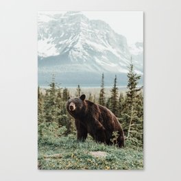 Bear Bear Canvas Print