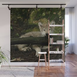 Timber wolf pup Wall Mural