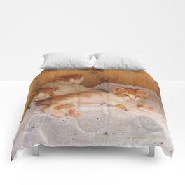 Kittens Comforters
