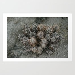 Monochrome Cactus in Joshua Tree National Park, California Art Print