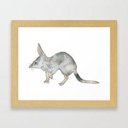 Investigative Bilby Framed Art Print
