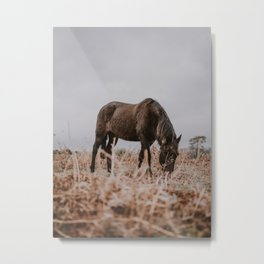 horse by Annie Spratt Metal Print
