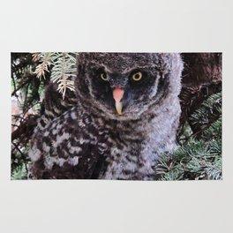 Real Owl Rug