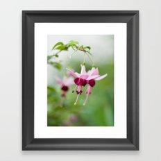 Fuchsia  8686 Framed Art Print