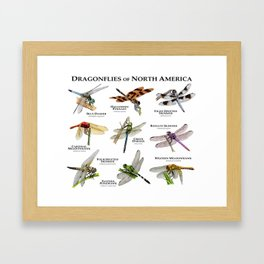 Dragonflies of North America Framed Art Print