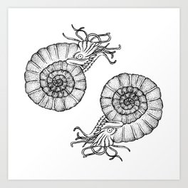 Ammonites Art Print