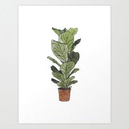 Ficus Lyrata Potted Plant.. Art Print