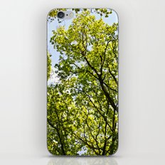 Peaceful Forest iPhone & iPod Skin
