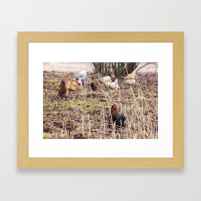chiken Framed Art Print