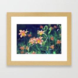 Orange Lillies Framed Art Print