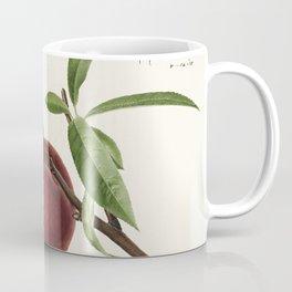 Peach twig (Prunus persica)(1918) by Royal Charles Steadman Coffee Mug