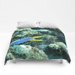 Blue ribbon eel Comforters