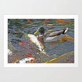 Pond Duck Koi Art Print