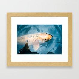 Koi Closeups #4 Surfacing Framed Art Print