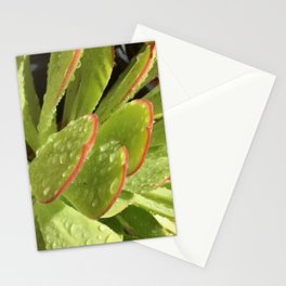 Succulent morning dew Stationery Cards