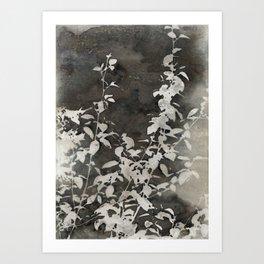 Charcoal Flowers Art Print