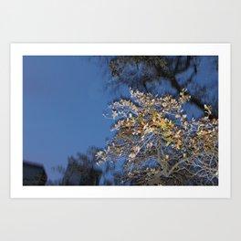 Melting Tree Art Print