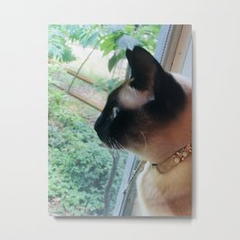 Curious Cat Looking Out Window Metal Print