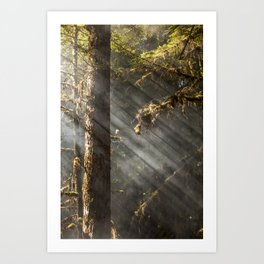Beautiful Trees / 2 Art Print