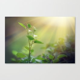 Light shining on a green sprout, sustainable energy Canvas Print