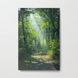 Woodland Glory Metal Print