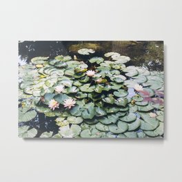 Lilies on the Water Metal Print