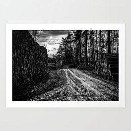 Poltery Site (Wood Storage Area) After Storm Victoria Möhne Forest 5 bw Art Print
