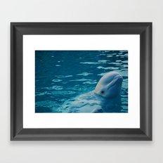 Beluga  Framed Art Print