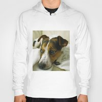 jack russell Hoodies featuring jack russell by Brmbrmba27