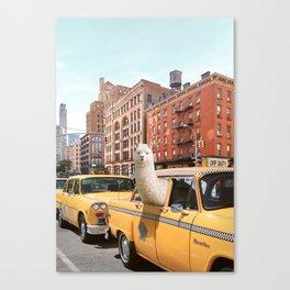 Alpaca in New York Canvas Print