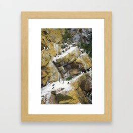 Guillemot on the cliffs of Skomer Framed Art Print