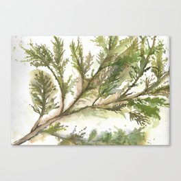 sap Canvas Print