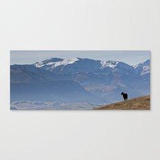 Himalayan Tahr Canvas Print