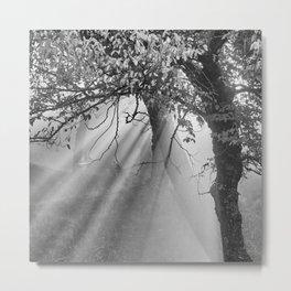 Sunrays Through The Oaks. Sierra Nevada BW Metal Print