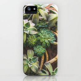 Botanical Gardens - Succulent #882 iPhone Case