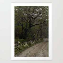 Mist Season Art Print
