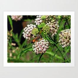 Wasp 1758 Art Print