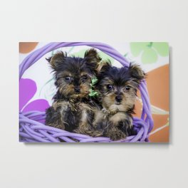 Two Yorkie Puppies in a Purple Basket with a Pink, Green, and Orange Spring Flower Background Metal Print